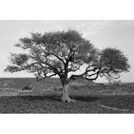 Sur la route de Sévaré, Mali 1994