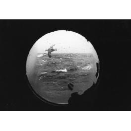 Mouette, Océan Atlantique 1992