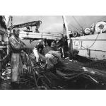 Remonté de Chalut, Océan Atlantique 1992